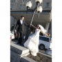 Winnipeg Photographer - Lloyd Rempel - bride & groom swinging on light pole - www.lrpv.ca
